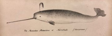 Dewhurst, The natural history of the order cetacea. [QL737.C4 D5 1834]